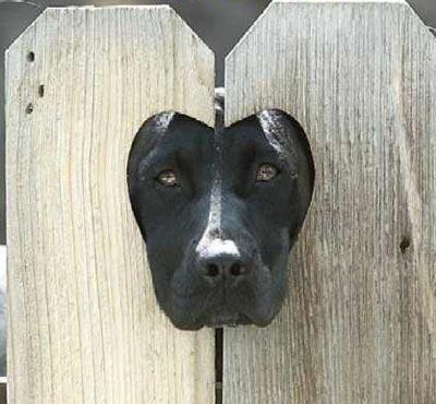 左右非対称の顔