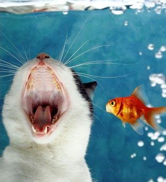 ねこと金魚